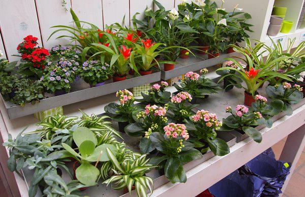 Alles für ein schönes Zuhause mit Zimmerpflanzen der Mühle Dickmann