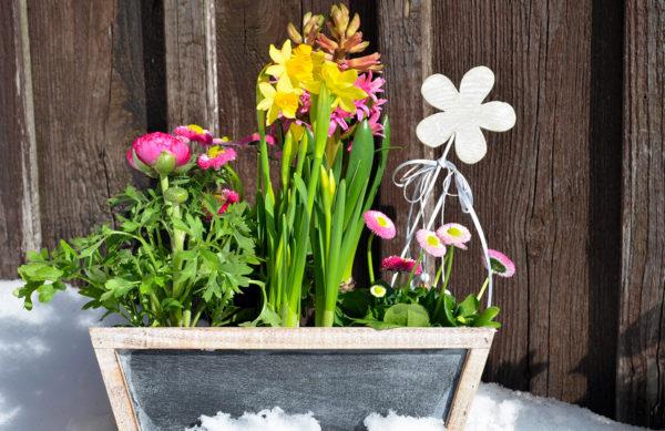 Frühlings Schale