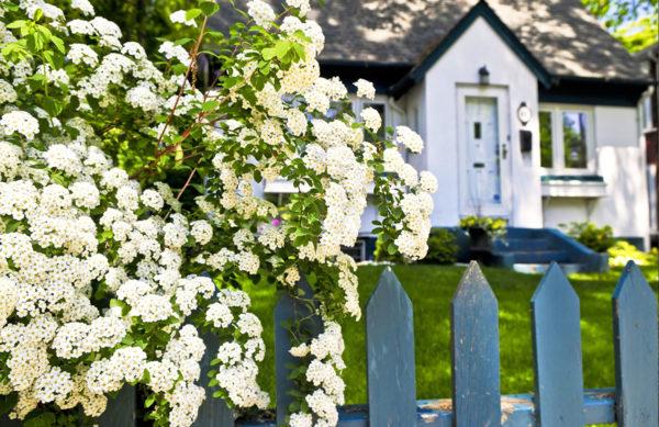 Gartenpflanze - Stachelbeere