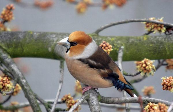 Vogelfütterung in Herbst und Winte