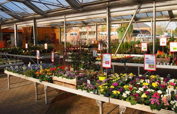 Hochwertige Pflanzen und Sämereien für Garten und Balkon