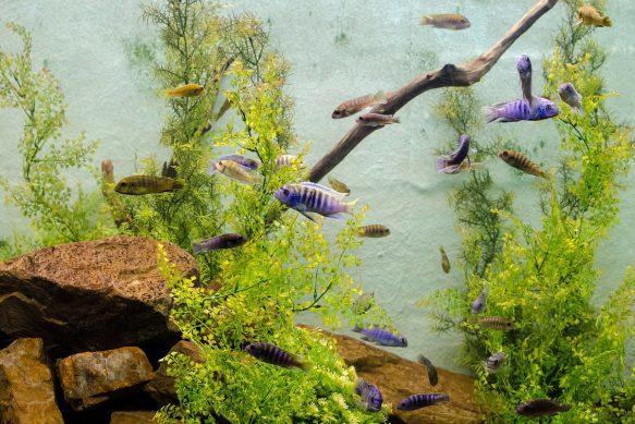 Algen im Aquarium - wichtige Tipps von der Mühle Dickmann