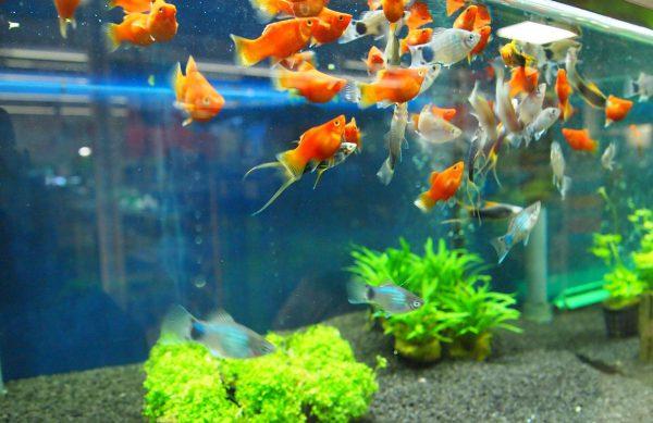 """Wir sind Ihr kompetenter Ansprechpartner rund um das Thema """"Aquaristik"""" und Teich"""