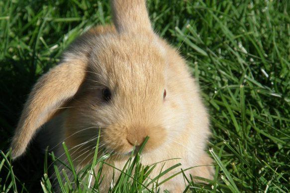 Kaninchenpflege - Das müssen Sie bei Ihren Nager beachten