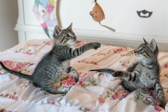 Katzenbeschäftigung - Problem Langeweile – Spielen macht glücklich
