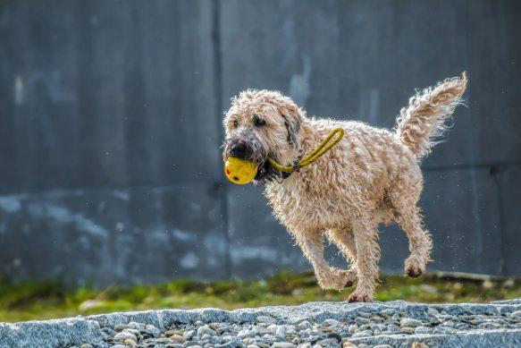 Spaziergang im Regen - auch bei bei Regen braucht ein Hund Auslauf