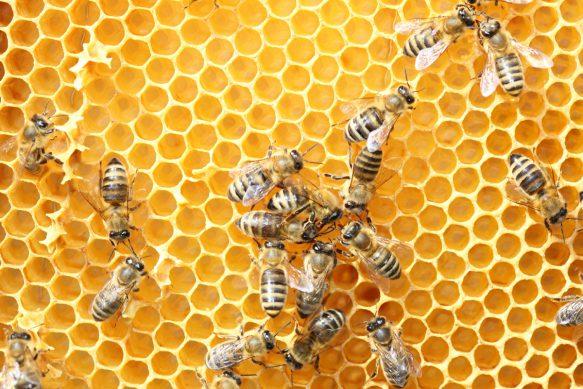 Honig vom Imker unseres Vertrauen
