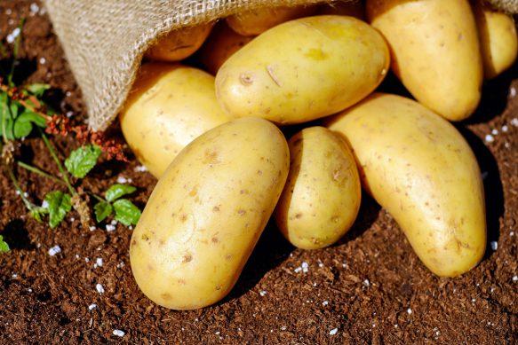 Frische Kartoffeln von der Mühle Dickmann